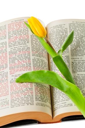 Tulip on Bible