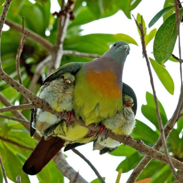 birds under wings of momma