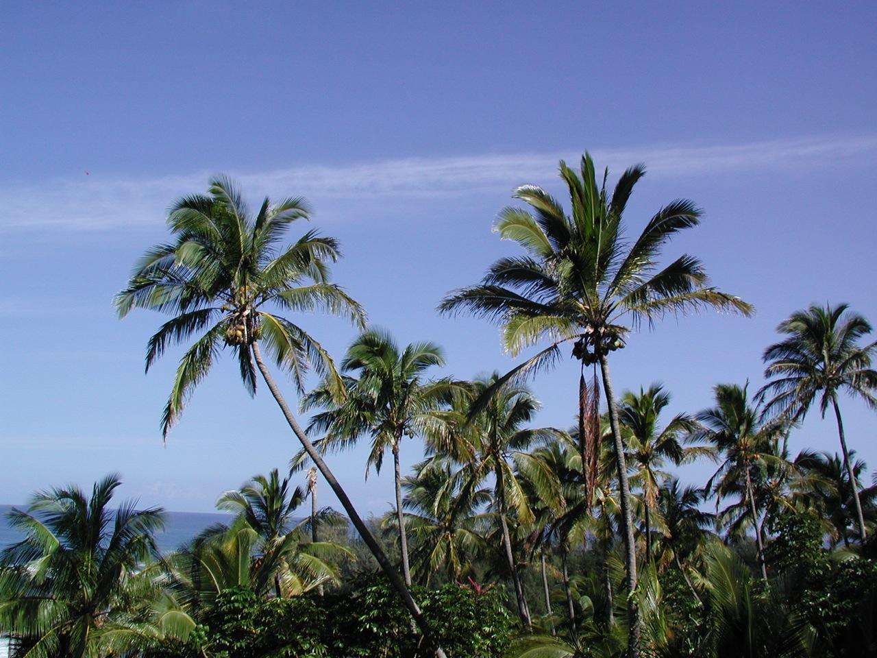Grove of palms