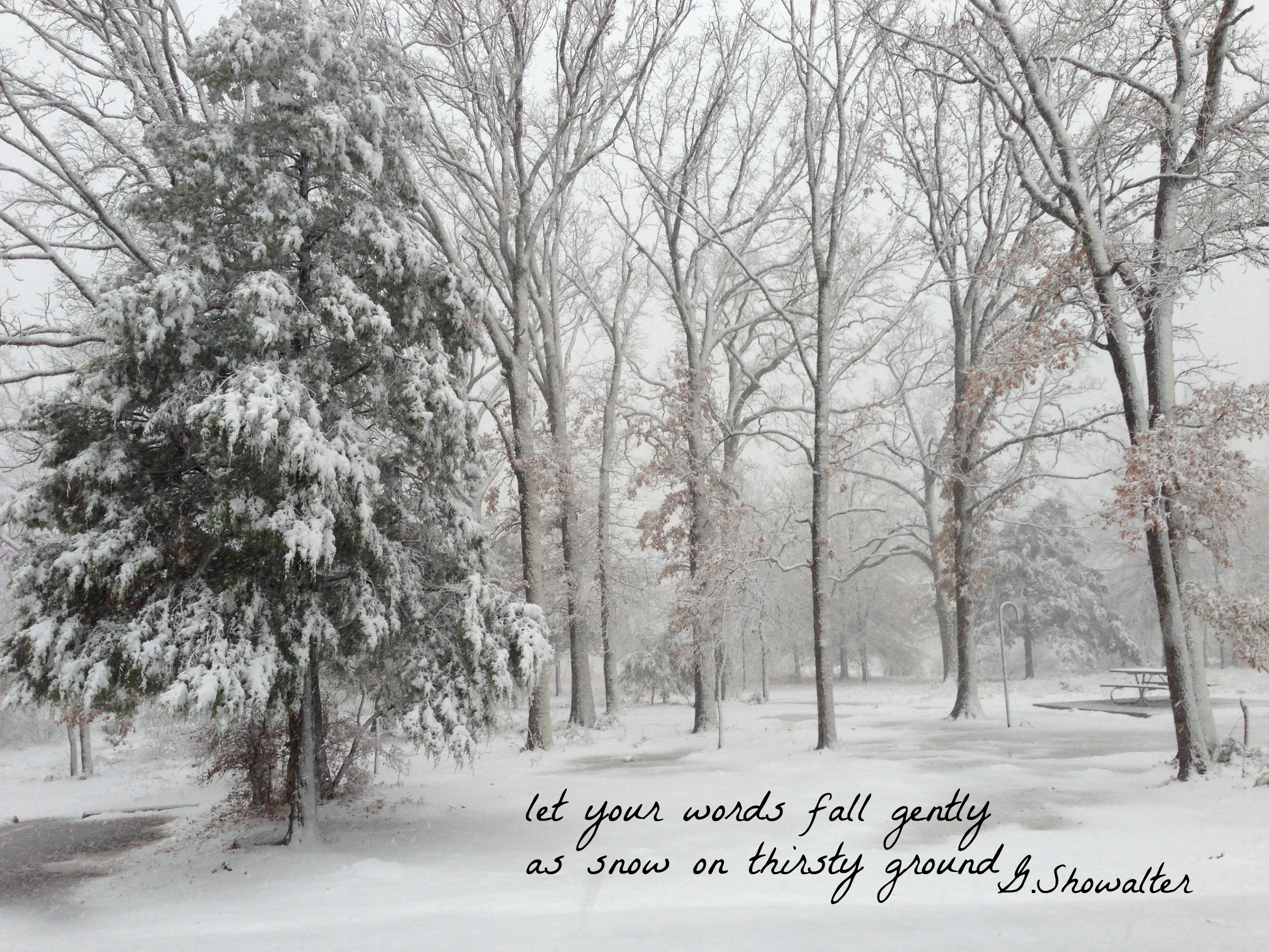 Snowfall in woods with quote