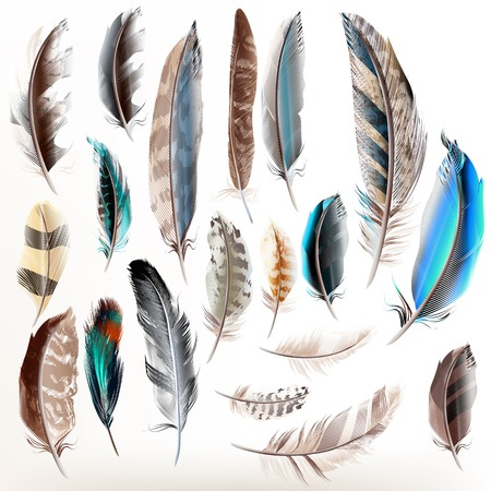 49076781 - big set or collection of detailed bird feathers in realistic style