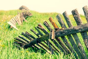 Wooden old ruined fence from boards in a field in summer with flowers and green grass. Latvia